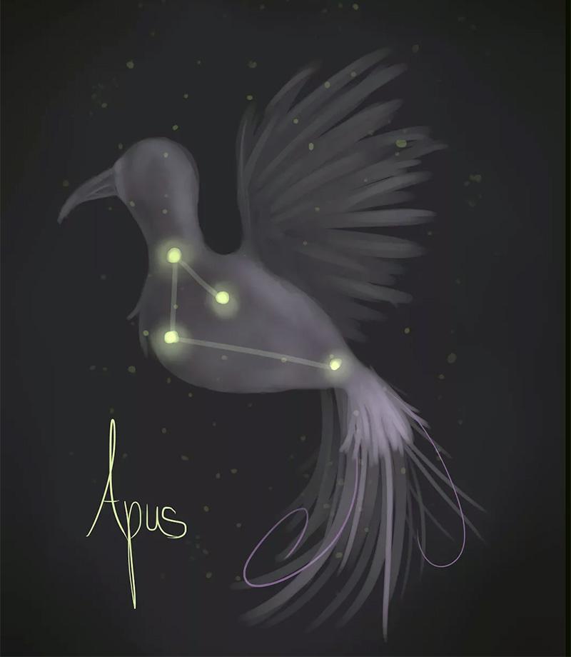 как найти созвездие Райская птица на небе