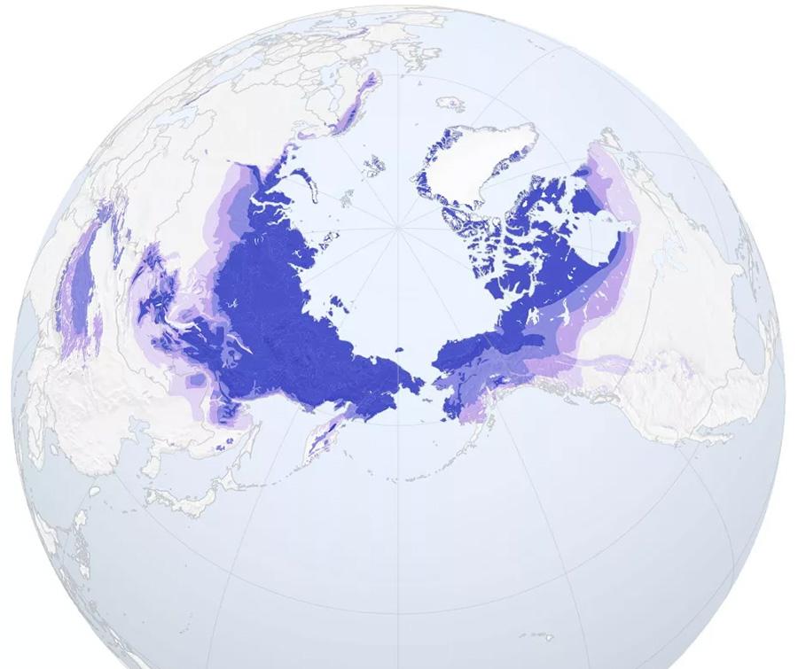 Вечная мерзлота на Земле встречается только в северном полушарии.