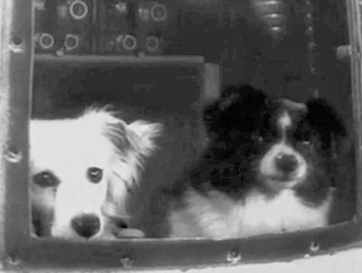 собаки Дезик (слева) и Цыган (справа) - первые собаки в космосе.