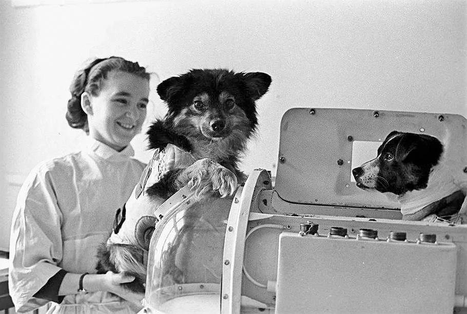 Собаки «космонавты» рядом с «космической капсулой».