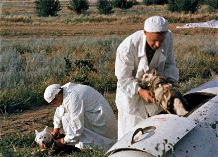 Персонал достает космических собак-испытателей из приземлившегося спускаемого аппарата