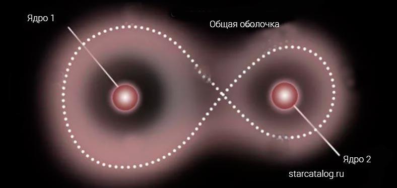 Контактная звездная система двойных звезд