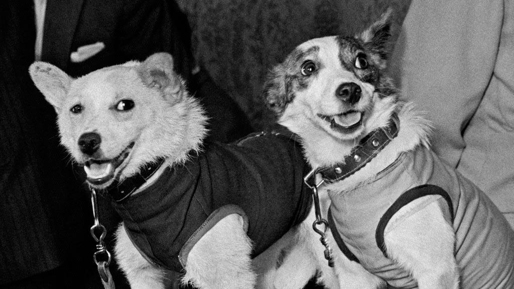 Всем известная парочка: Белка и Стрелка, не первые «космические собаки», однако первые благополучно вернувшиеся на землю