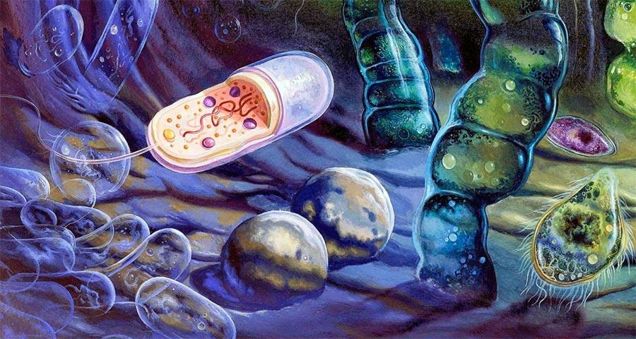 Жизнь - не случайный гость на нашей планете. Ископаемые свидетельства говорят вполне четко - простейшие микроорганизмы появились на Земле