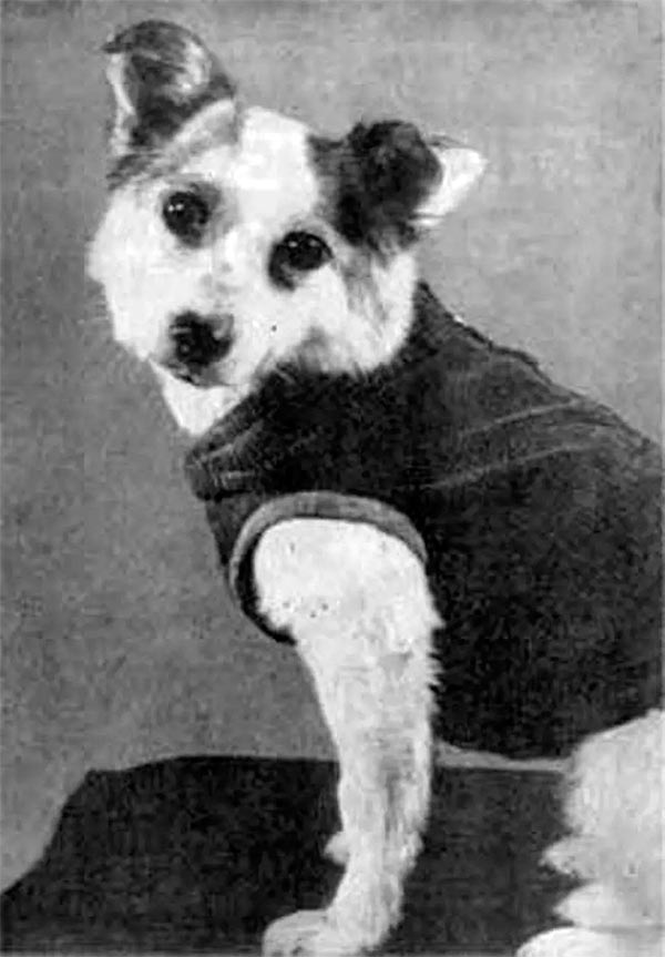 Звездочка - предшественница Юрия Гагарина, 25 марта 1961 г.