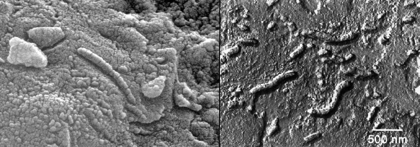 Фотографии (с сильным увеличением) марсианского метеорита ALH 84001. Как видите... это... довольно странно.