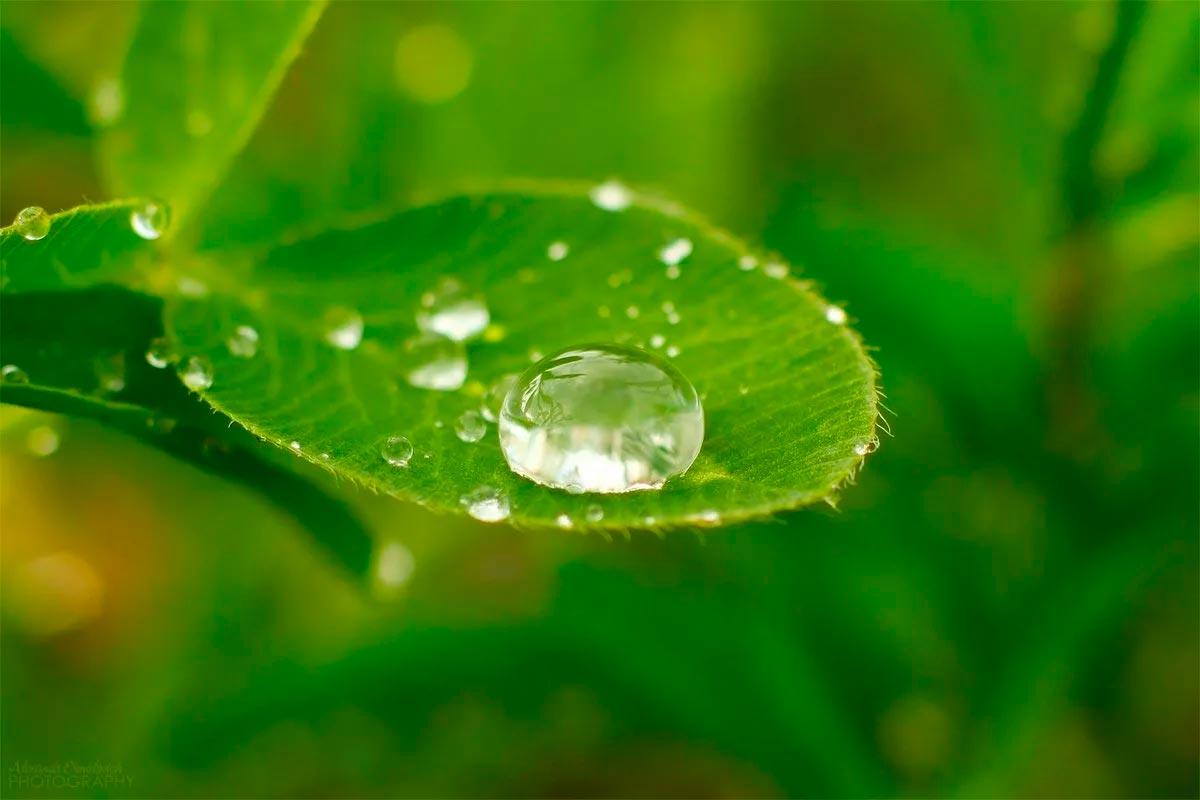 сила поверхностного натяжения воды и гравитация